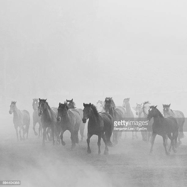Horses Running On Field During Foggy Weather