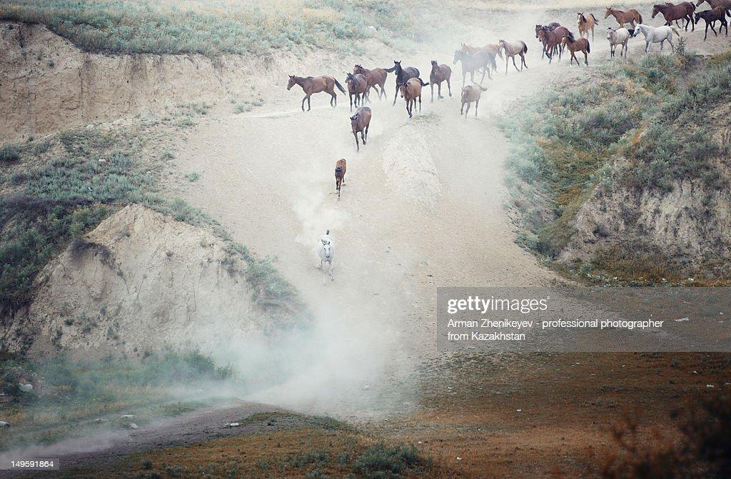 Horses running : Stock Photo