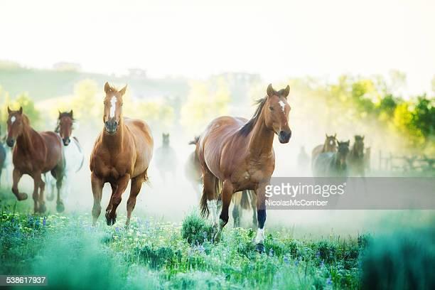 Cavalos executar a pastagens com nevoeiroweather forecast manhã de Fazenda de Montana