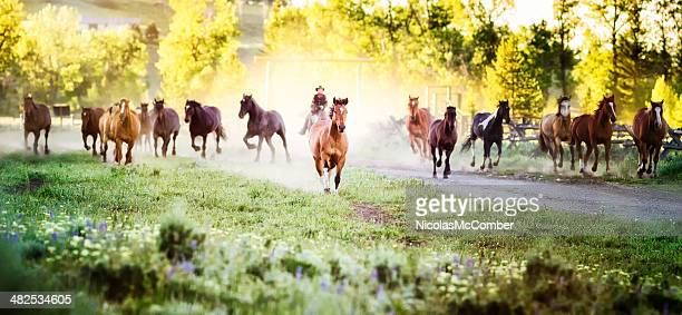 Horses running to pastures