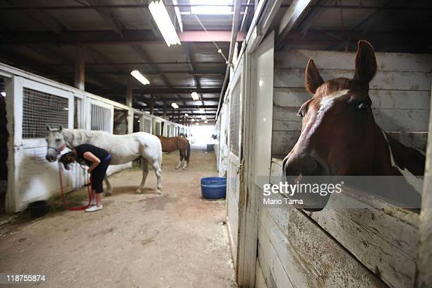 Horses stand in a barn at the Calgary Stampede on July 10 2011 in Calgary Canada The tenday event featuring over one million visitors is Canada's...