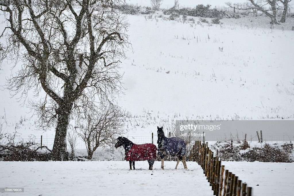 Horses stand in a snow covered field on January 22, 2013 in Blairgowrie, United Kingdom.The Met Office has issued a red weather warning for parts of the Uk and advising against all non-essential travel as up to 30cm of snow is expected to fall in some areas today. The adverse weather has closed nearly 5,000 schools and caused many airports to cancel flights.