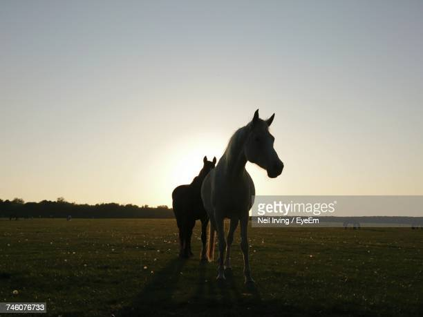 Horses Standing On Field Against Clear Sky