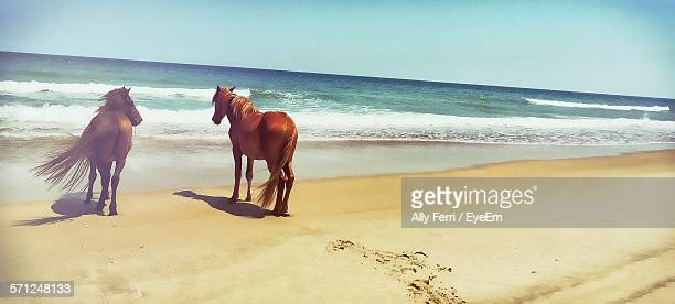 Horses Standing On Sand At Beach