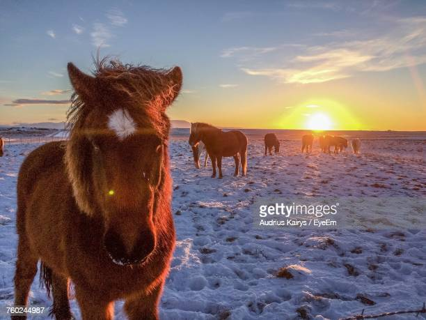 Horses Standing On Snow Covered Field Against Sky During Sunset