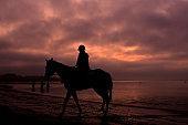 AUS: Horses Prepare for Racing at Balnarring Beach
