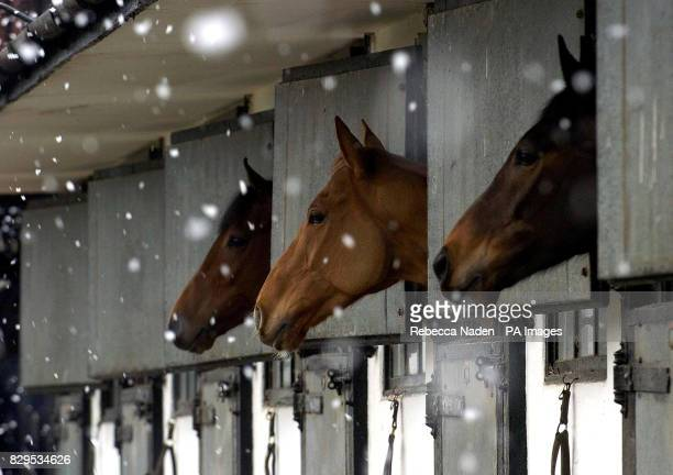 Horses trained by National Hunt trainer Nicky Henderson in their boxes as it snows outside the stables ahead of the Cheltenham Festival