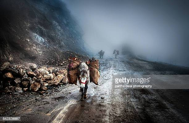 Horses transportation of mountain