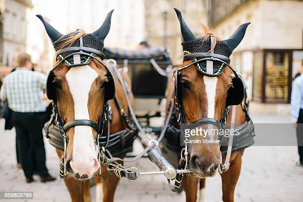 Horses waiting in front of Stephansdom