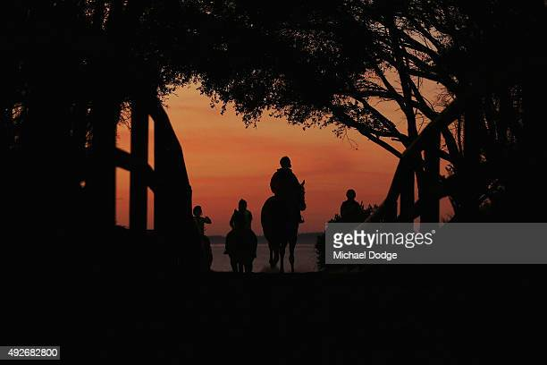 Horses walk out to the beach at Balnarring Beach on October 15 2015 in Melbourne Australia Balnarring Beach is a remote beach on the Mornington...