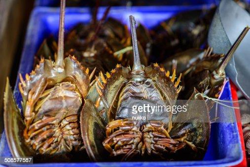 Horseshoe crabs for sale at fresh food market in Thailand. : Stock Photo
