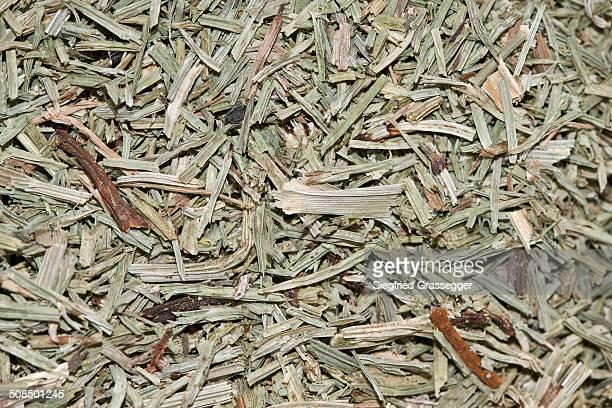 Horsetail tea, organic tea