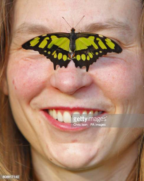 Horticulturalist Cara Smith gets a close look at a Malachite butterfly at the RHS Garden Wisley near Woking in Surrey Over 1000 butterflies will be...