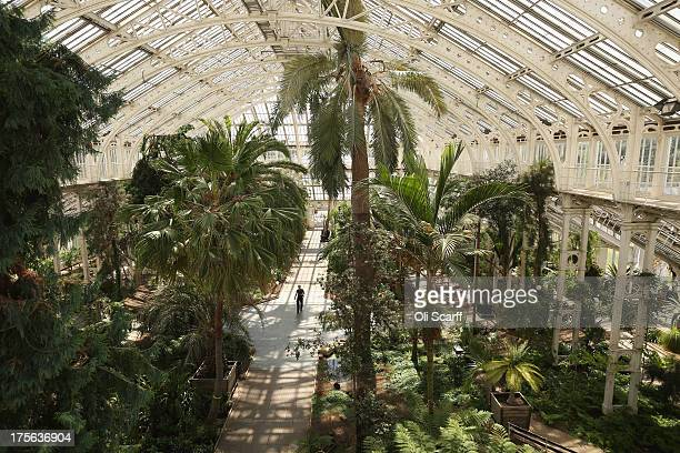 Horticulturalists at the Royal Botanic Gardens Kew remove plants from the Temperate House prior to a fiveyear refurbishment of the glasshouse on...