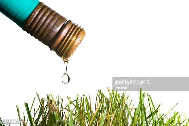 Tuyau d'arrosage de pelouse et au-dessus de l'eau