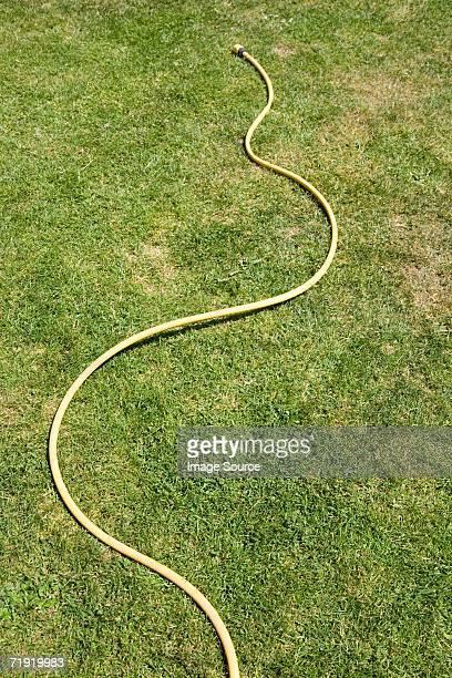 A hose