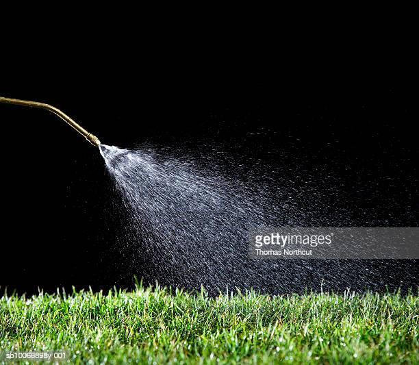 Flessibile Annaffiare erba su sfondo nero