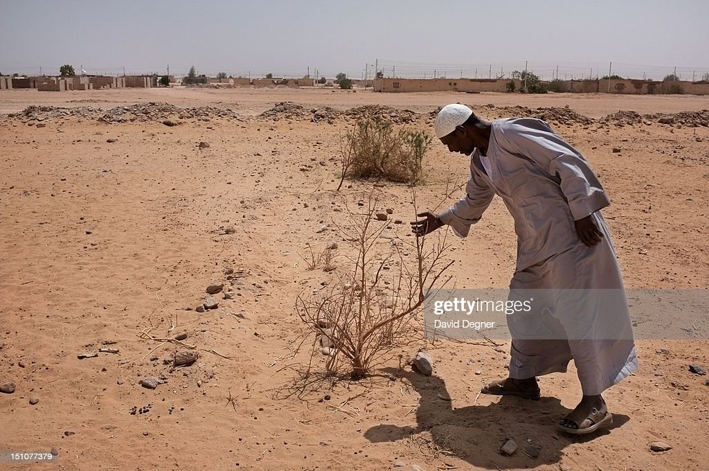 Hosny Ahmed Said walks through a dried up orchard outside Future Village of Abu Simbel March 14 2012 The water is insufficient and unpredictable so...