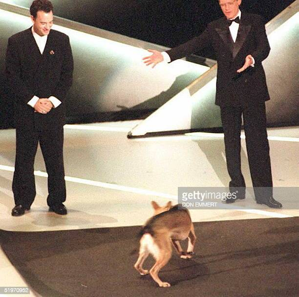 Host David Letterman and actor Tom Hanks watch Sadie the dog perform a stupid pet trick during the 67th Annual Academy Awards 27 March in Los Angeles...