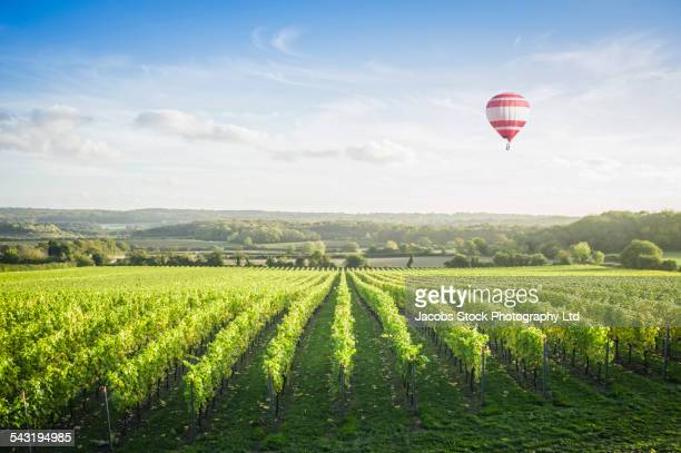 Hot air balloon floating over vineyard on hillside