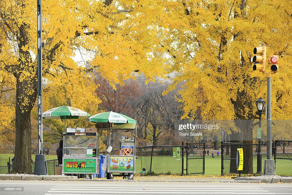 Hot dog stand under the autumn color ltrees.
