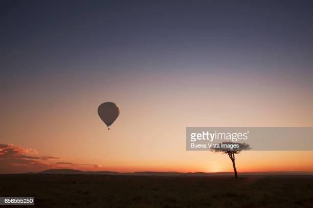 Hot-air balloon and acacia tree in the african savannah at sunrise