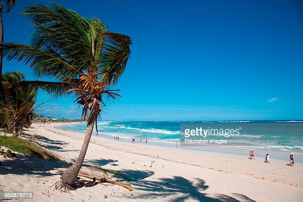 Hotel Barcelo Punta Cana Beach Hispaniola Dominican Republic Caribbean