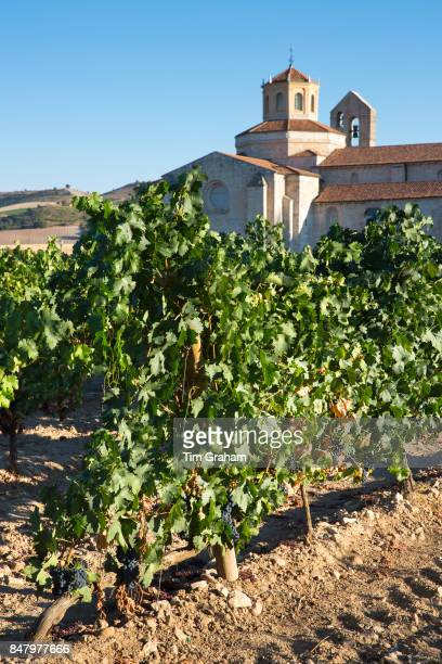 Hotel Castilla Termal Monastery of Valbuena vineyard of Tempranillo grapes ribera del Duero wine production Valladolid Spain