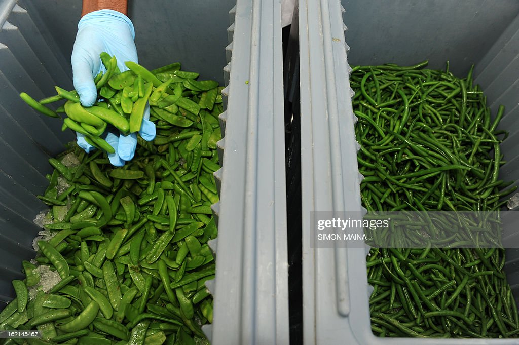 A hotel chef prepares vegetable salads from rejected green peas and green beans salads, grown by Kenyan farmers but rejected by UK supermarkets due to cosmetic imperfections, on February 19, 2013 during the Governing Council of the United Nations Environment Programme (UNEP) at the UN headquarters in Nairobi. The campaign aims to promote actions by consumers and food retailers to dramatically cut the 1.3 billion tonnes of food lost or wasted each year -- which, aside from the cost implications and environmental impacts, increases pressure on the already straining global food system -- and help shape a sustainable future. AFP PHOTO / SIMON MAINA