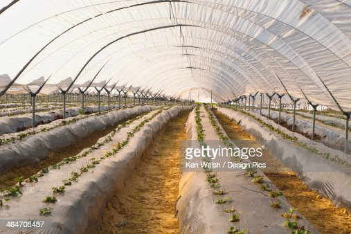 Hothouse Used For Growing Strawberries Near Palos De La Frontera