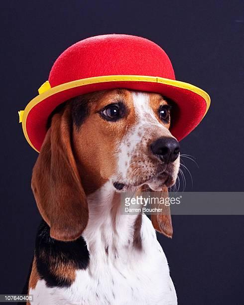 Hound in red derby hat