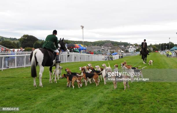 Hounds from the Vale of Lune hunt parade on the track at Cartmel Racecourse Cartmel Cumbria