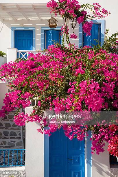 House and bougainvillea, Oia, Santorini, Greece