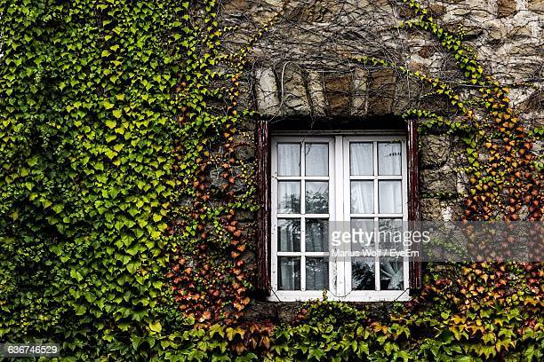 House Covered With Creepers