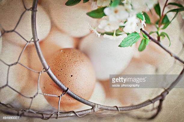House eggs