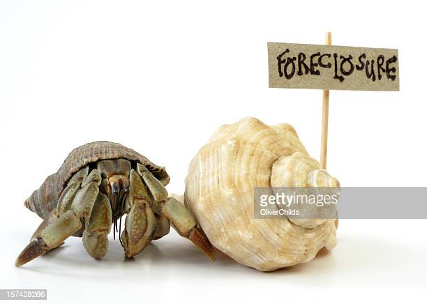 House hunting Hermit Crab.