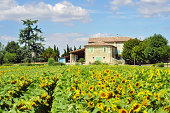 House in Provence with sunflowers