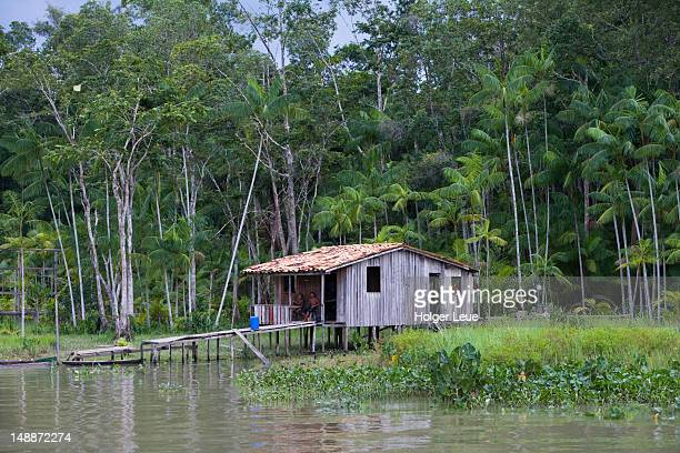 House on stilts on banks of Amazon river in tropical rainforest, Combo Island.