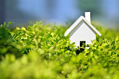 House on grass leaves