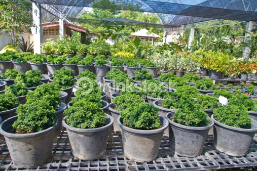 Flower Pot In Nursery Stock Photo