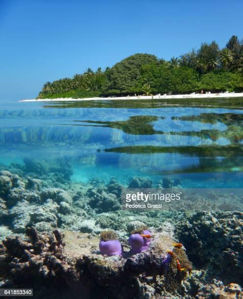 House Reef Of Biyadhoo Island And White Sand Beach