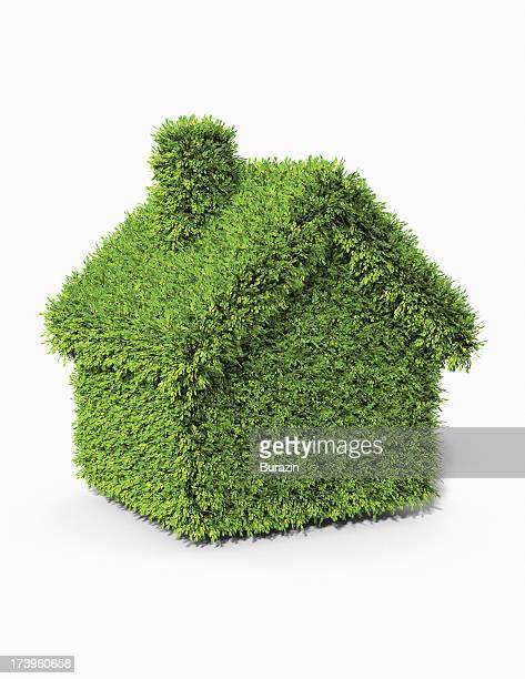 House shaped boxwood  topiary