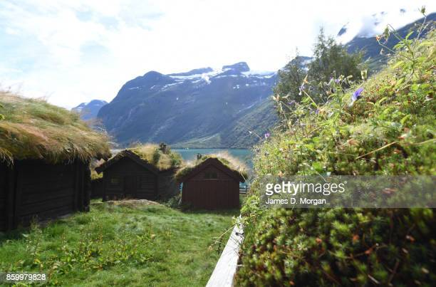 Houses with grass and other plants growing off the roofs among the waterside of a Norwegian fjord in northern Norway on February 8th 2017 in Norway