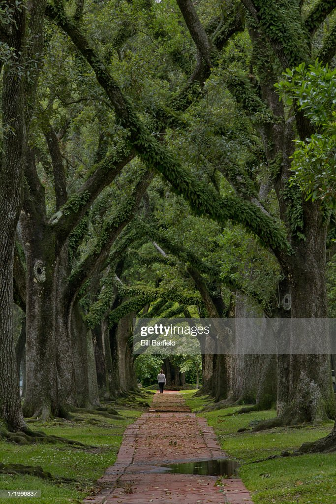 Houston Live Oaks