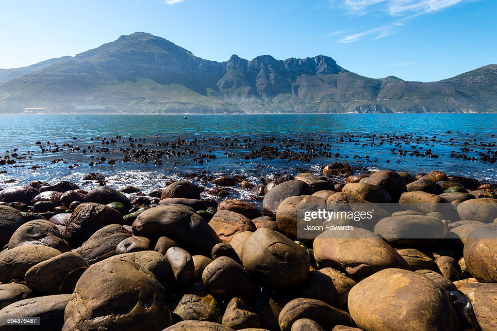 A kelp forest and boulders line the shore of Hout Bay.