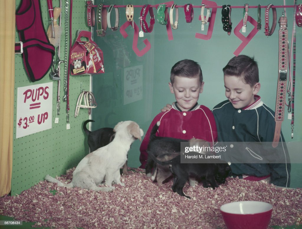 Two boys looking at puppies in the window of a pet shop 1957