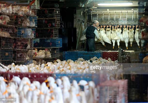 Huannan market which stop running because of bird flu restart to run on 14th January 2015 in Taipei Taiwan China