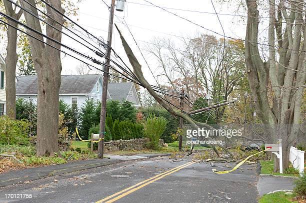 Große branch zerstoßenen power lines bei Hurrikans Sandy