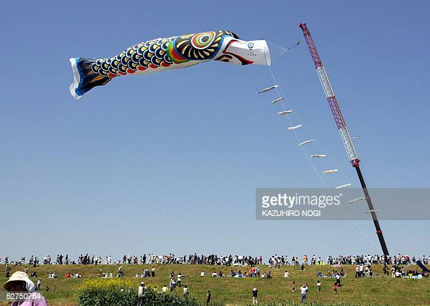 A huge carp streamer 100 meters long and weighing 350 kilos floats in the air while viewers look up from a bank along the Tone River in Kazo Saitama...