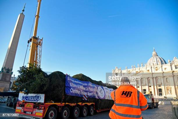 A huge Christmas tree arrives on a truck at St Peter's square on November 23 2017 in Vatican This year's the Christmas tree that will adorn St...